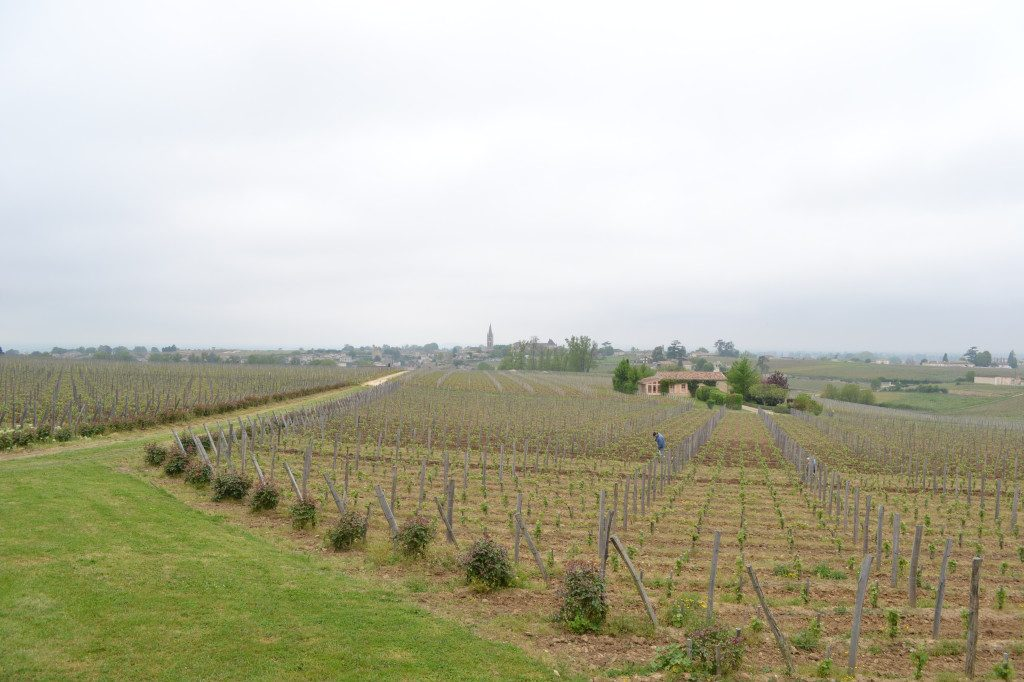 Vineyards of Troplong Mondot overlooking the village of Saint-Emilion