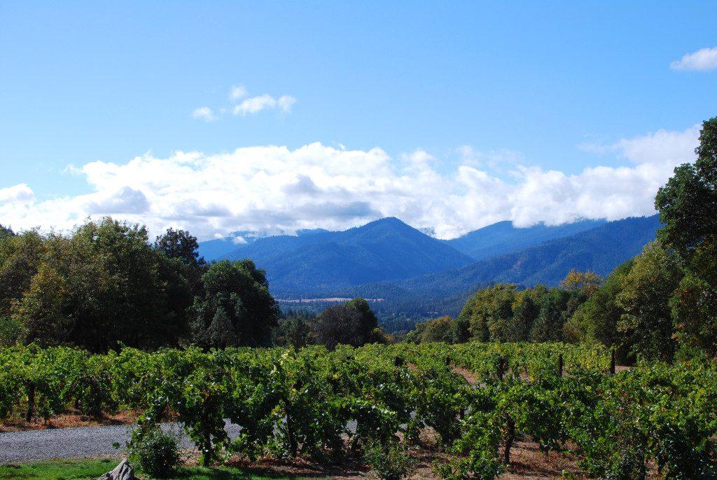 Beautiful view from Wooldridge Creek Vineyards tasting room